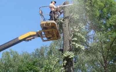 Спил, кронирование и валка деревьев - Новокузнецк, цены, предложения специалистов