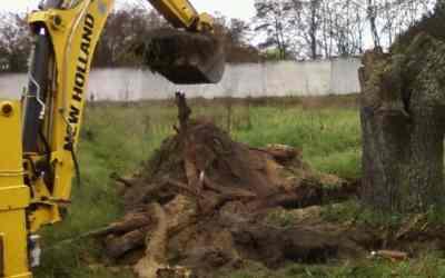 Корчевание пней, спил веток и стволов деревьев - услуги спецтехники - Кемерово, цены, предложения специалистов