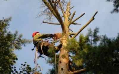 Спил и вырубка деревьев - Кемерово, цены, предложения специалистов