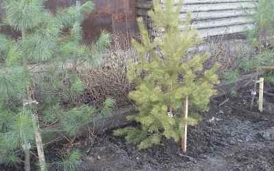 Спил деревьев - Кемерово, цены, предложения специалистов