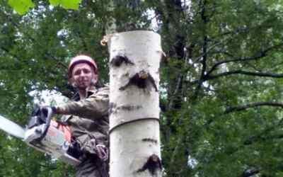 Спил и вырубка деревьев - Новокузнецк, цены, предложения специалистов