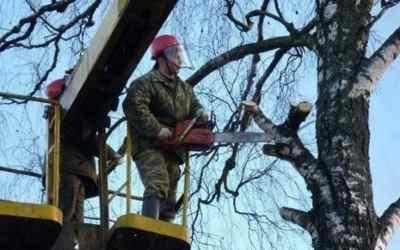 Спил и вырубка деревьев с автовышки - Кемерово, цены, предложения специалистов