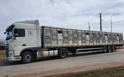 Перевозка животных и скота 8-965-920-08-80 - Кемерово, цены, предложения специалистов