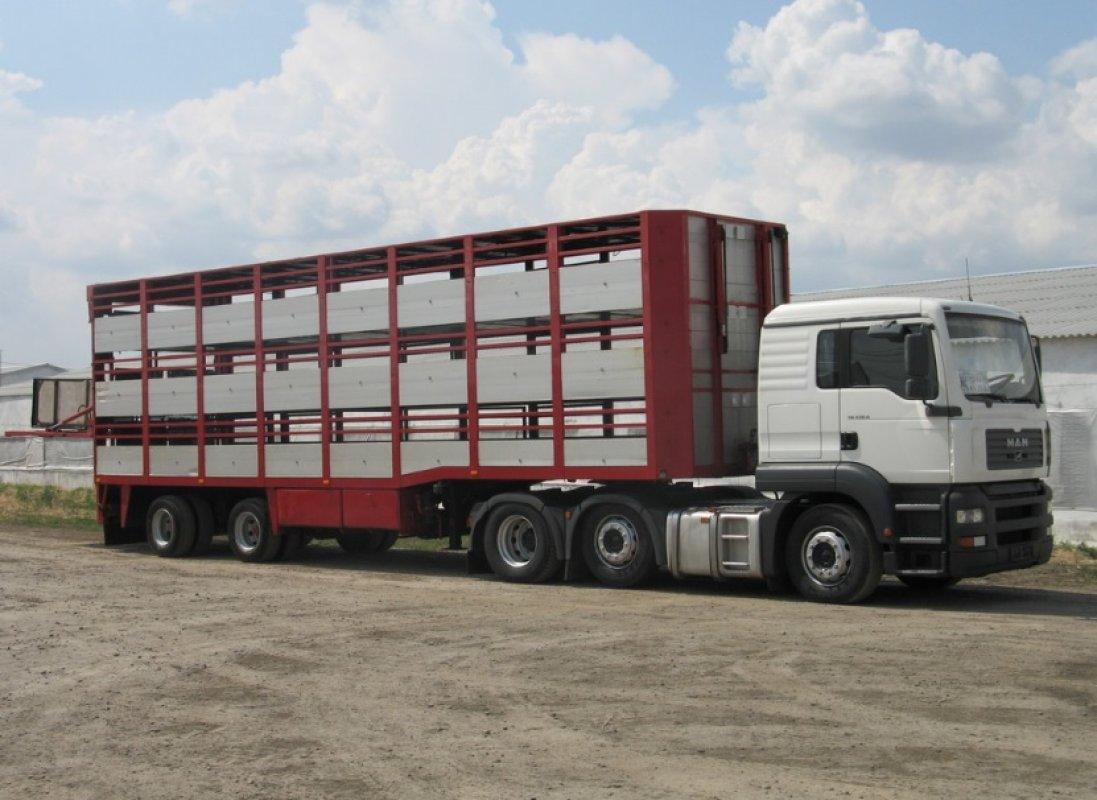 Прием заявок на перевозку животных и скота. Диспетчерская - Кемерово, цены, предложения специалистов
