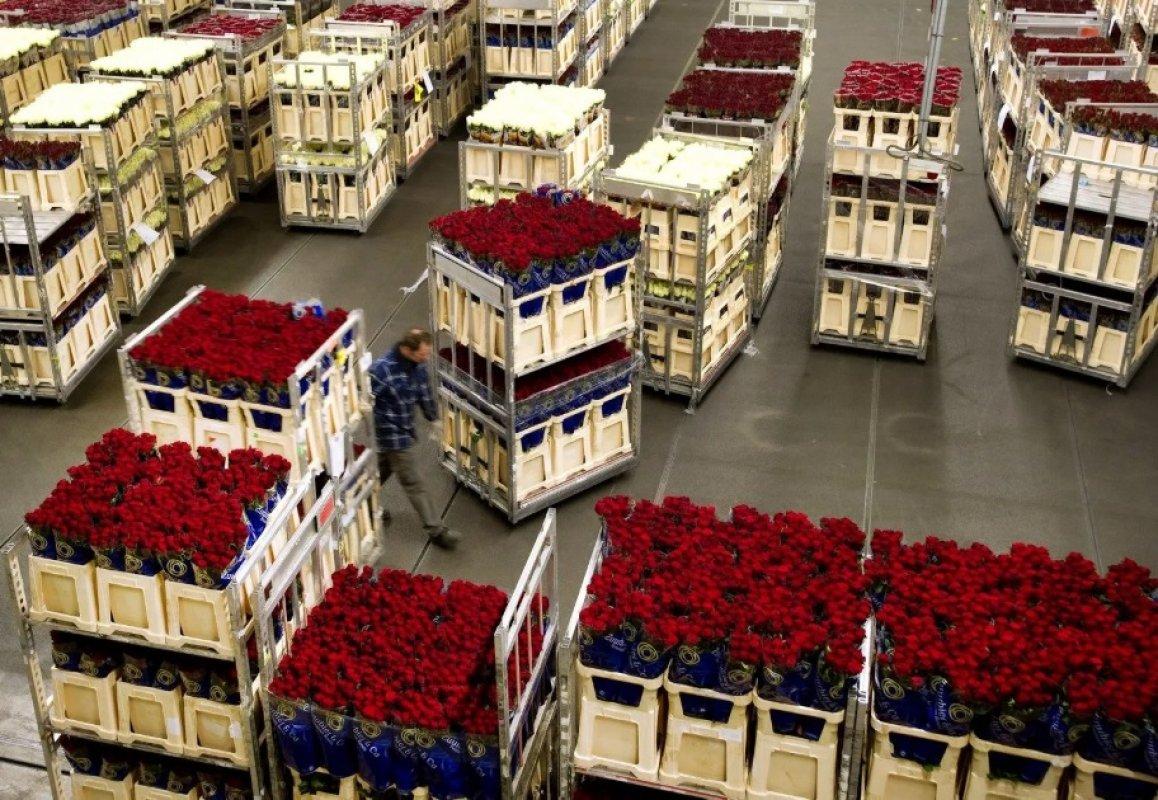 Прием заявок на перевозку цветов. Диспетчерская - Кемерово, цены, предложения специалистов