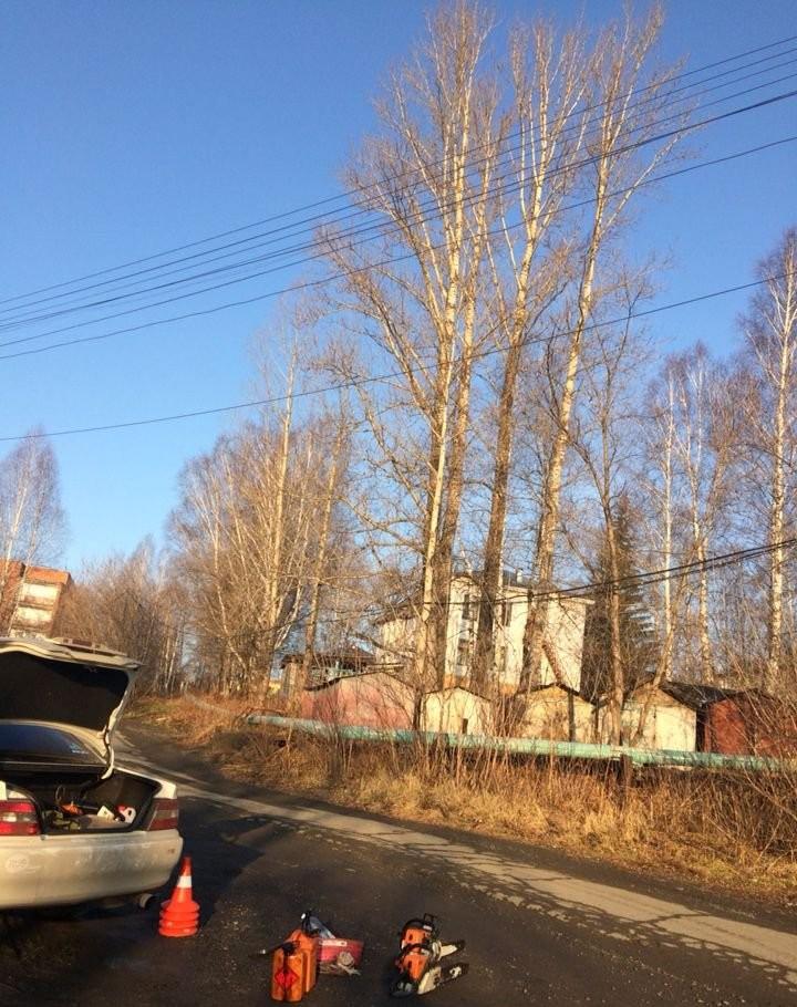 Спил деревьев - Новокузнецк, цены, предложения специалистов