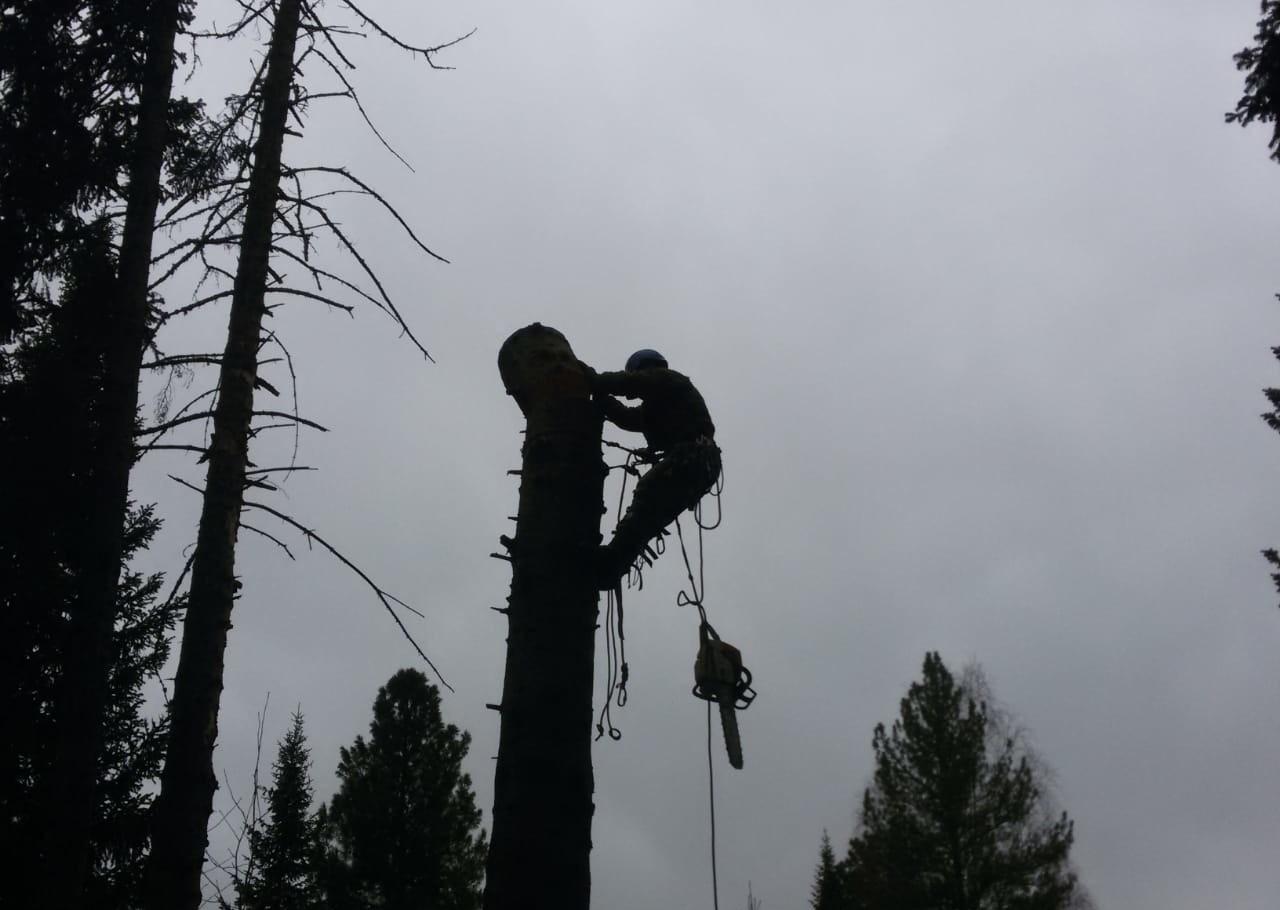Спил деревьев любой сложности, по всей области - Новокузнецк, цены, предложения специалистов