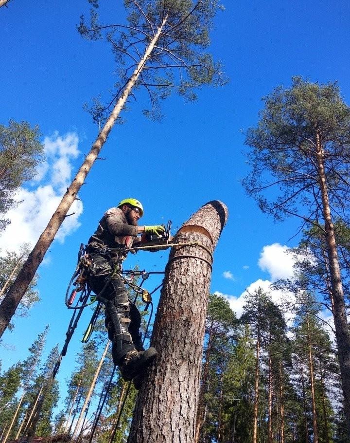 Спил и валка деревьев - Новокузнецк, цены, предложения специалистов