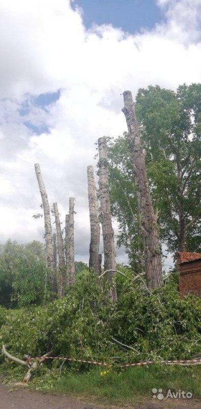 Спил и вырубка деревьев в Прокопьевске - Прокопьевск, цены, предложения специалистов