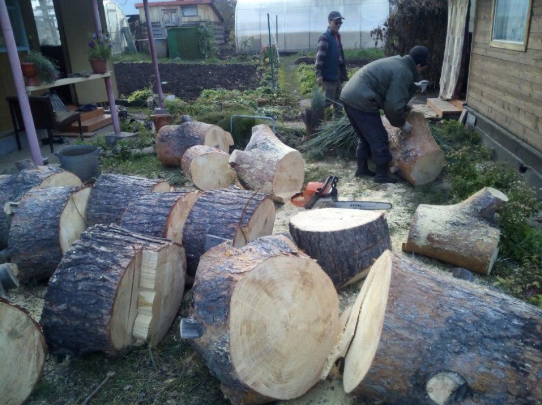 Спил и вырубка деревьев любой сложности - Новокузнецк, цены, предложения специалистов