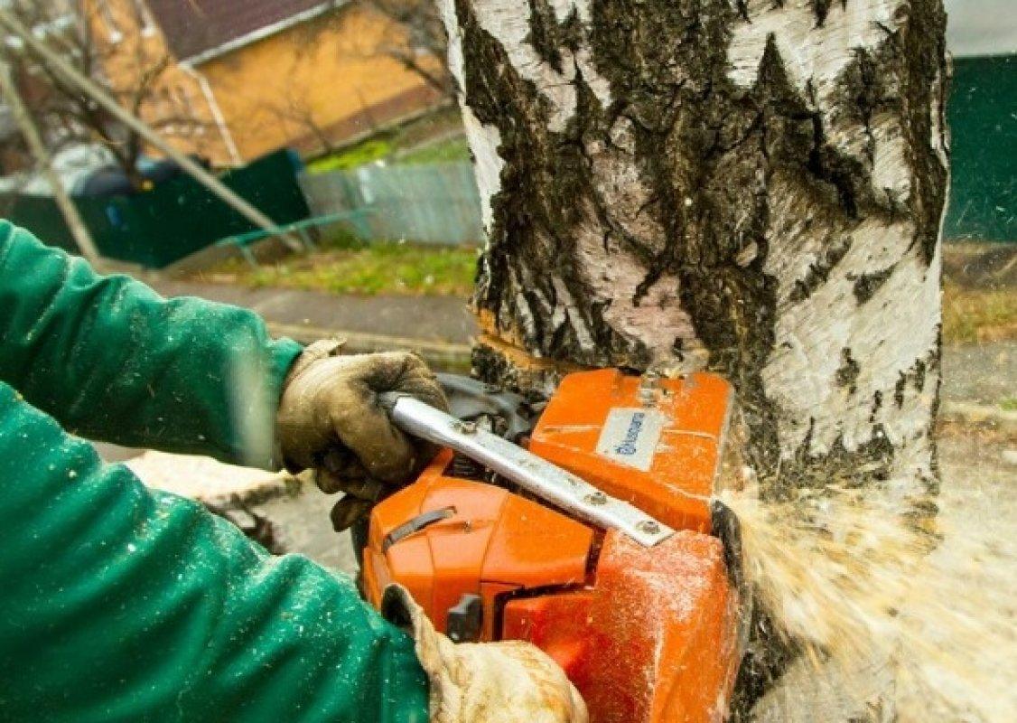 Удаление деревьев и пней на вашем участке - Кемерово, цены, предложения специалистов