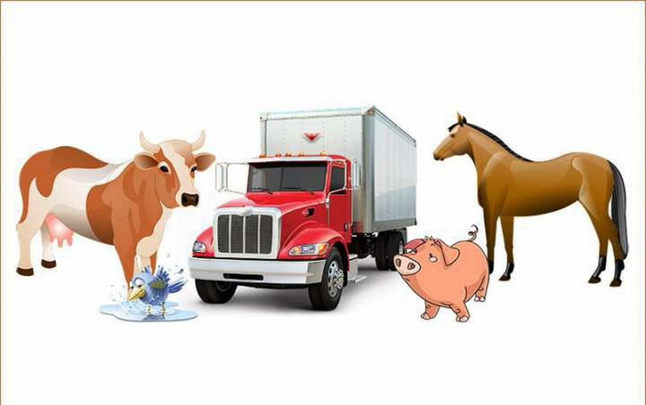 Перевозка крупно рогатово скота - Белово