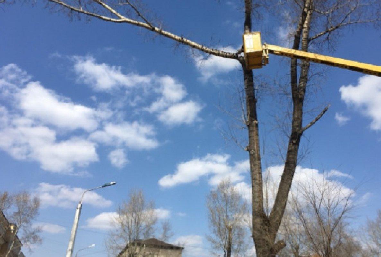 Спил, валка и кронирование деревьев - Новокузнецк, цены, предложения специалистов