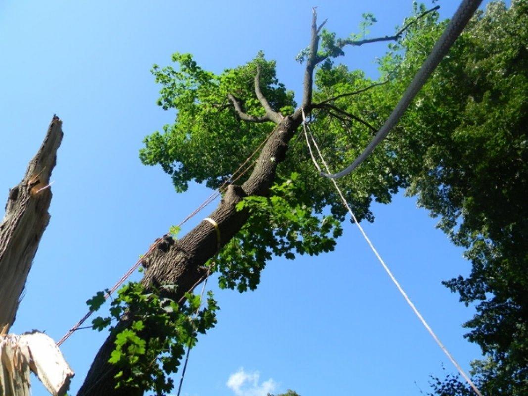Удаление старых и опасных деревьев - Альпина 42 - Кемерово, цены, предложения специалистов